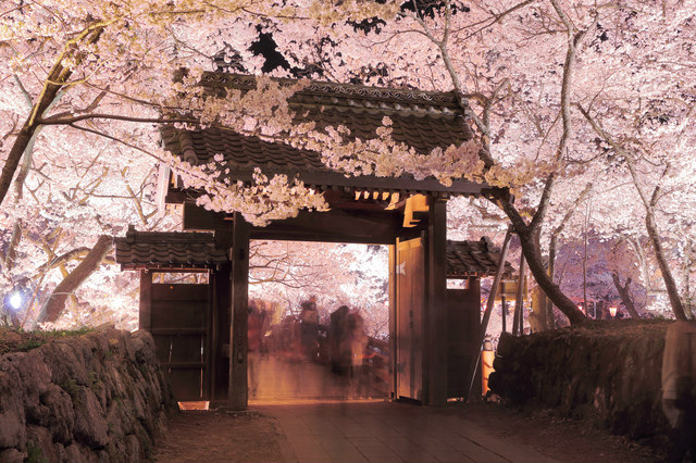 Cherry blossoms at a Japanese gate, night